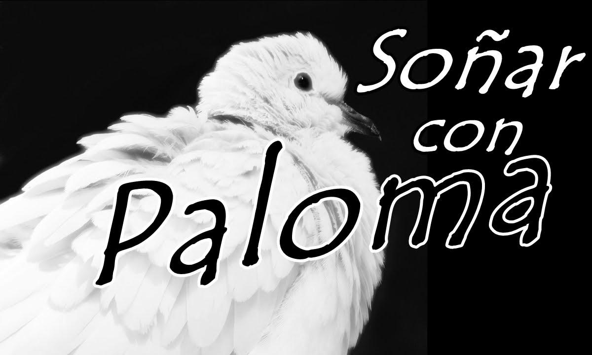 Significado De Paloma Gris En La Ventana