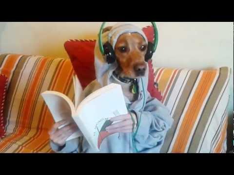 Perro leyendo. Dog reading