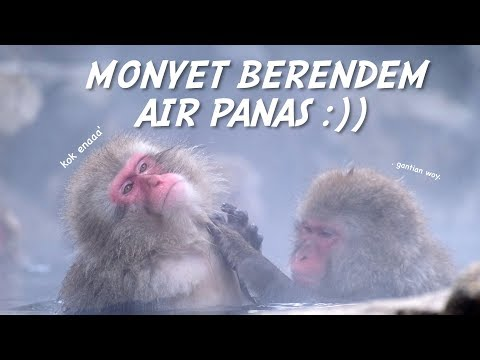 BERENDAM DI ONSEN BARENG MONYET? | JIGOKUDANI SNOW MONKEY PARK NAIK KERETA 'PANORAMIC' JR SHINANO!