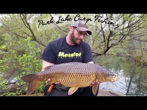 Carp Fishing The Park Lake