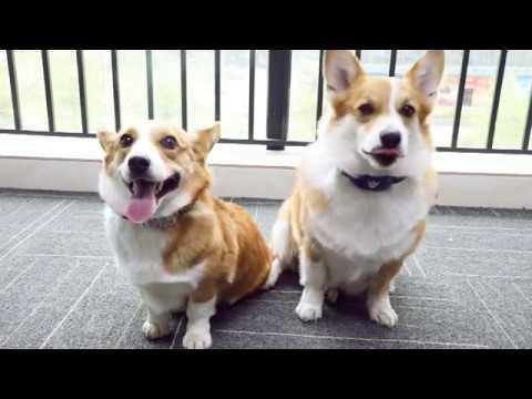 Chauder Smart Dog Anti Barking Collar Unpacking Review
