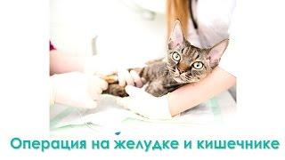 Операция на желудке и кишечнике. Ветеринарная клиника Био-Вет.
