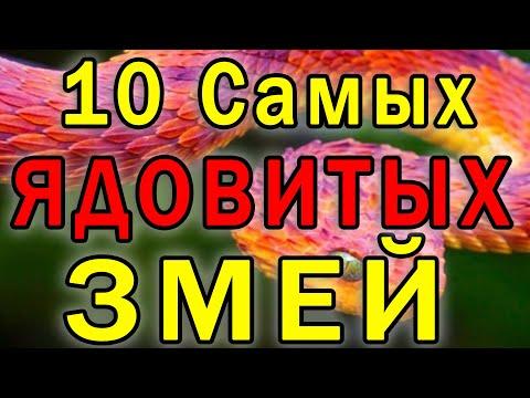 ТОП 10 Самые Опасные Змеи в Мире, которые Уничтожат Вас МГНОВЕННО!