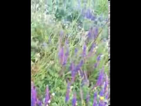 Лечебные травы лекарственные сборы народная аптека