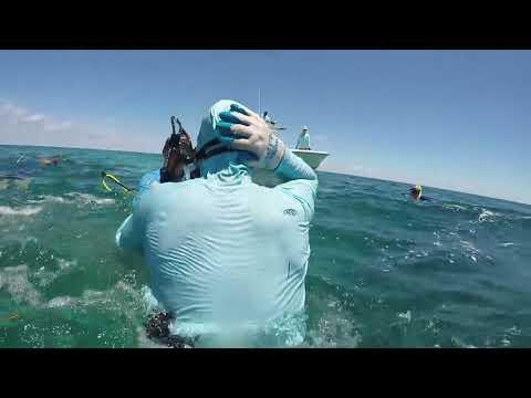 Un tiburón muerde en la cabeza a un submarinista