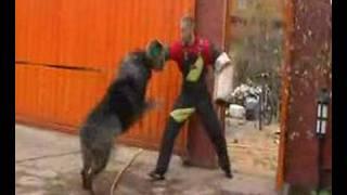 Terrible dog :-)