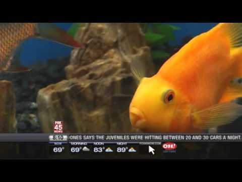 Looney Laws: Don't Get The Fish Drunk