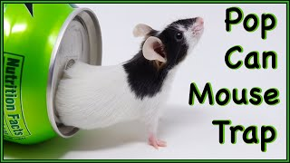 Can Mice Squeeze into A Pop Can?  The Can Mouse Trap From 2007 - Mousetrap Monday