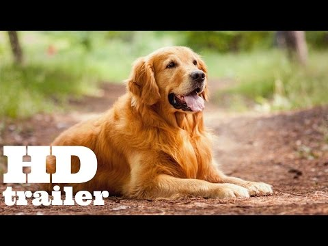 The Dog Lover   trailer HD-1080   streaming vf