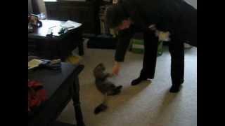 My cat hates my mom.AVI