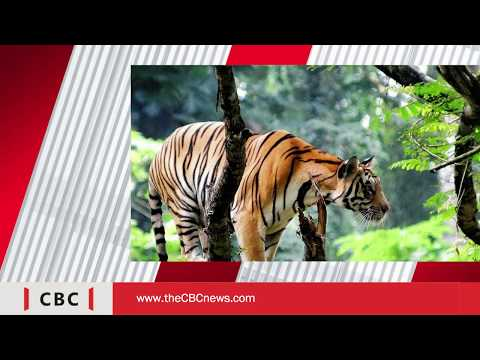 The CBC News I top 10 tourist places in Kerala I in English