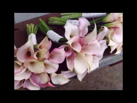 white-roses-and-pink-calla-lilies-bouquet