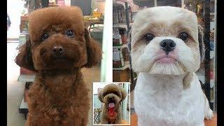 Квадратные собаки у японцев/Любопытные факты