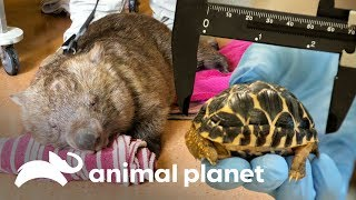 Top 3: animales adorables | Los Irwin | Animal Planet