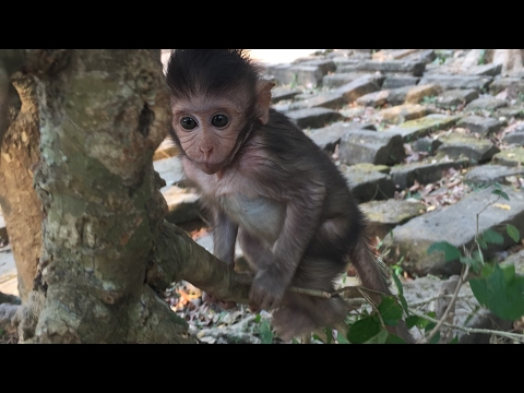 life of monkeys, cute baby girl playing on bough tree