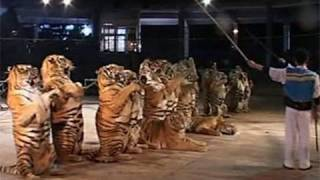 China tiger park flouts loophole