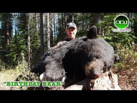 Ontario Black Bear Archery Hunt With Hillsport Hillton