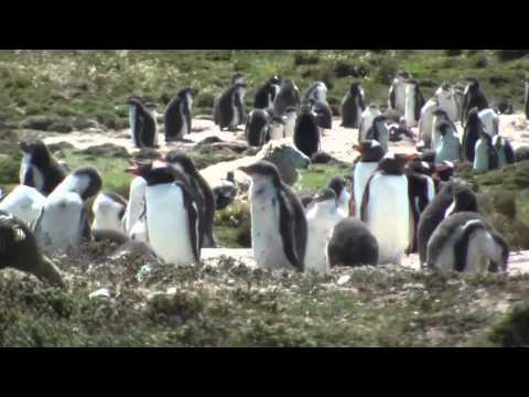 Berthas Beach Falkland Islands