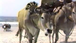 Plage de Torreira Portugal 1989