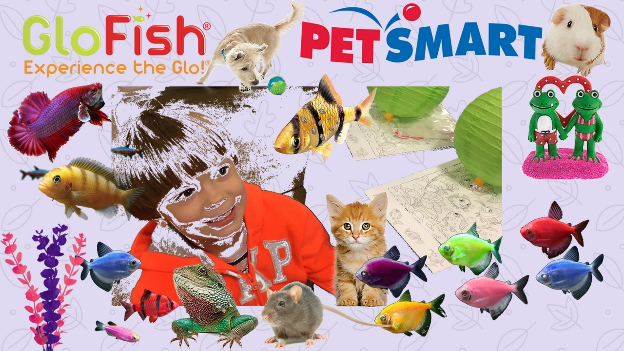 petsmart get to know
