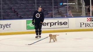 St. Louis Blues adopt adorable puppy