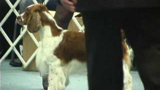 The 2008 Asc Flushing Spaniel Dog Show... Best In Show