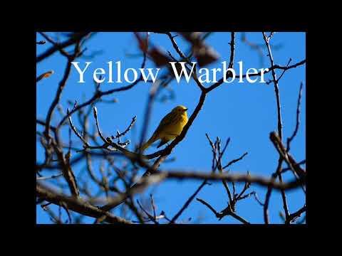 Michigan Bird ID W/audio (Part 1)