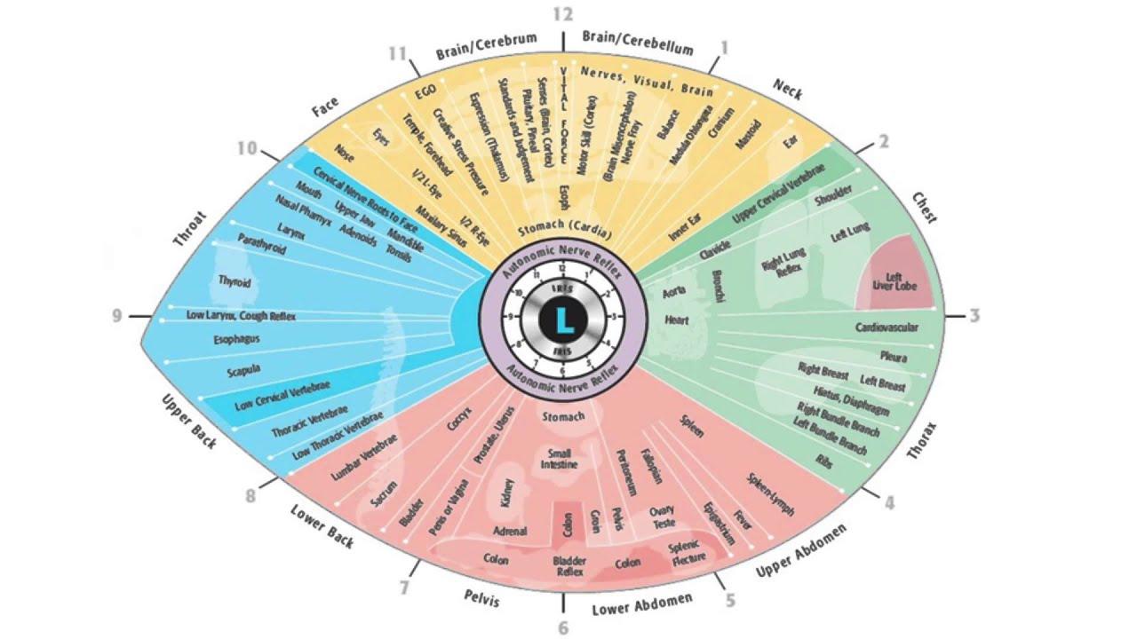 Sclerology Chart Left Eye Iridology Reviews