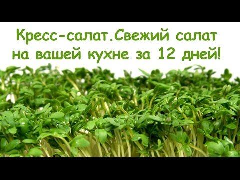 Условия для выращивания кресс