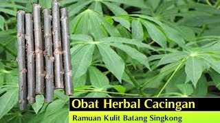 Obat Cacingan: Obat Herbal Cacingan dari Tanaman Obat Herbal Singkong