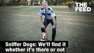 Sniffer Dogs: We'll Find It Whether It's There Or Not