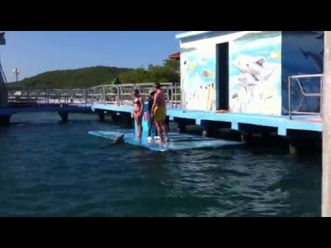 Cuba - December 2015 Day Trip to the Dolphinarium
