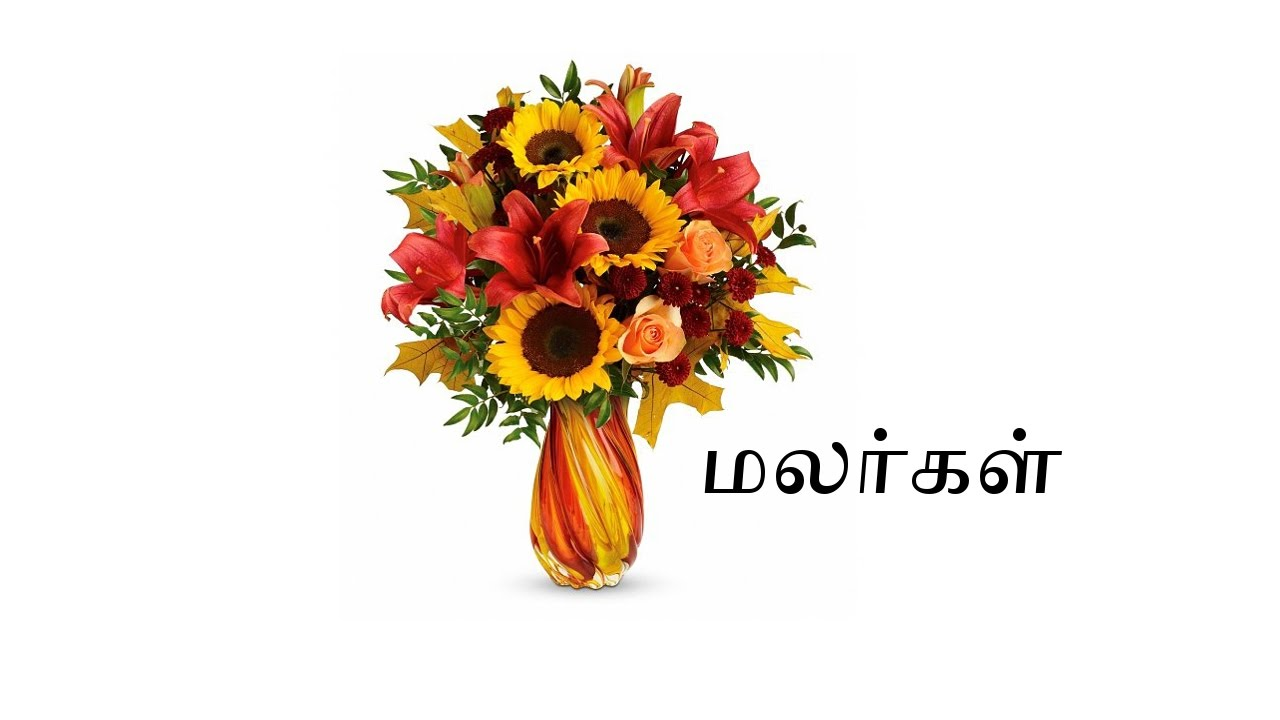 Flowers Names In Tamil With Pictures Youtube
