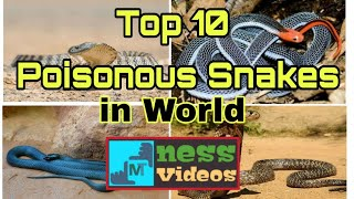 Top 10 Poisonous Snakes in World | Top 10 Poisonous Snakes | Top 10 Deadliest Snakes in World