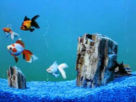 The XP MCE fish aquarium screensaver   YouTube