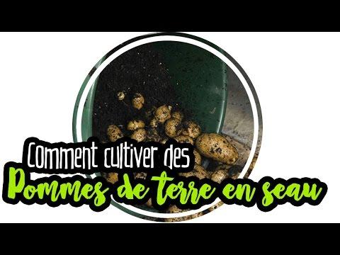 permaculture pommes de terre en seau youtube. Black Bedroom Furniture Sets. Home Design Ideas