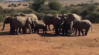 17.06.03 南アフリカ共和国 ピラネスバーグ国立公園 象の群れたち