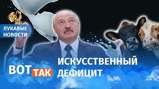 Лукашенко оставил беларусов без молока / Лукавые новости