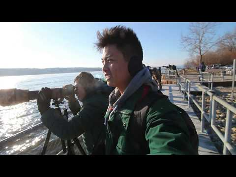 Rock Island Bald Eagle Sighting