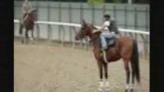 ~Big Brown- the best race horse!~