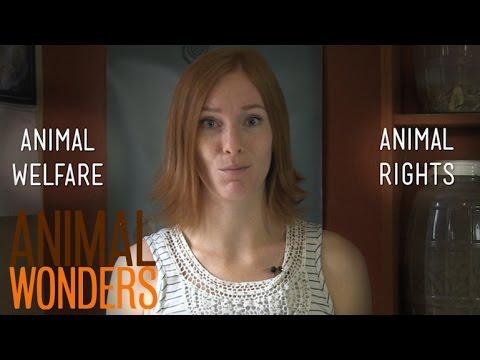 Animal Welfare vs. Animal Rights