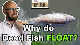 why-week-why-do-fish-float-upside-down-when-they-die