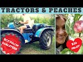 Tractors and peaches - BCS Volcan V800 DUALSTEER -