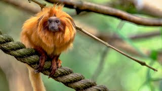 4 Adorable Animals That You Might Never Have Heard Of | The Science of Cute | BBC Earth