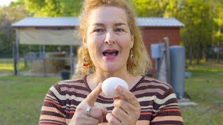 How do chicken eggs get fertilized? *More Than You Ever Wanted To Know*