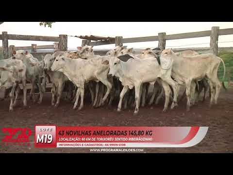 LOTE M19
