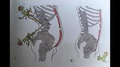 Selkäkipu - asennon anatomia ja sen korjaaminen