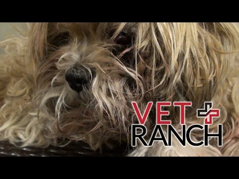 Injured Dog Abandoned on Clinic Porch