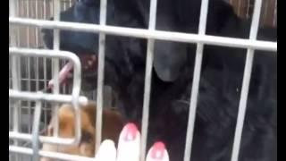 Донецк Аэропорт Собаки на свободе