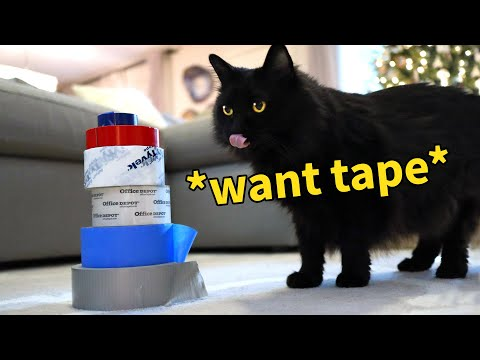 E&K Tuesdays: Our Cat Ranks Her Favorite Tapes